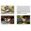Odúban vagy költőládában szaporodó madarak