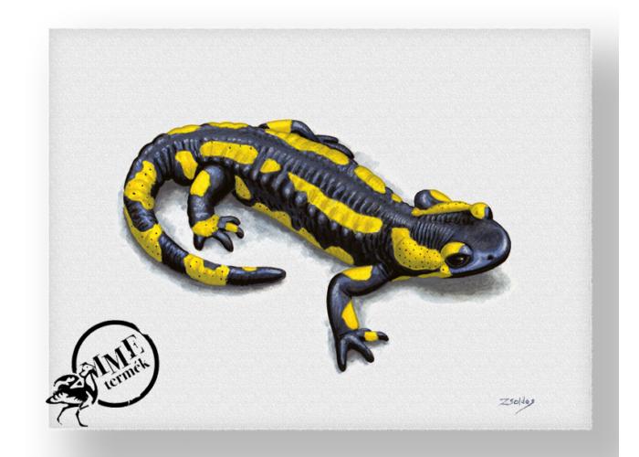 Falikép - foltos szalamandra