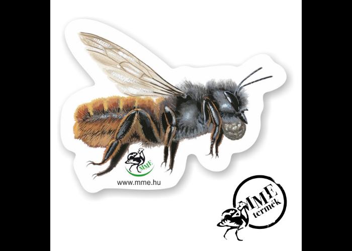 Mágnes - fazekas méh