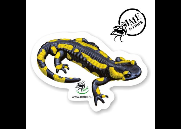 Mágnes - foltos szalamandra