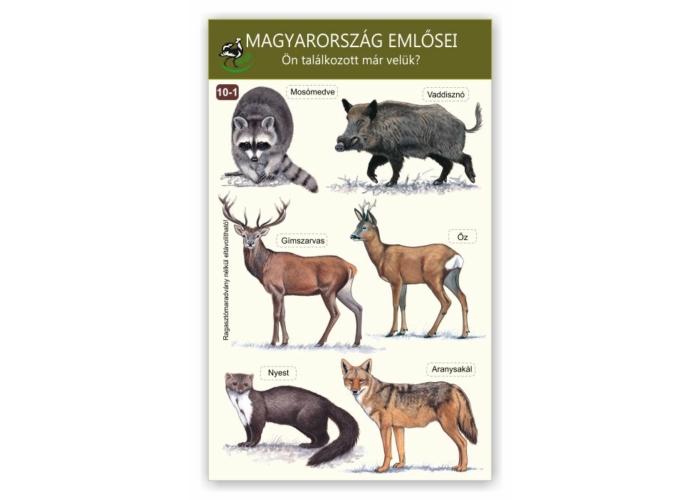 Ablakmatrica - Magyarország emlősei 1.
