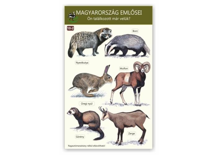 Ablakmatrica - Magyarország emlősei 2.