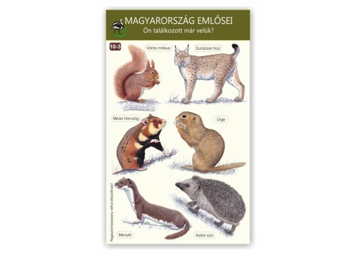 Ablakmatrica - Magyarország emlősei 3.