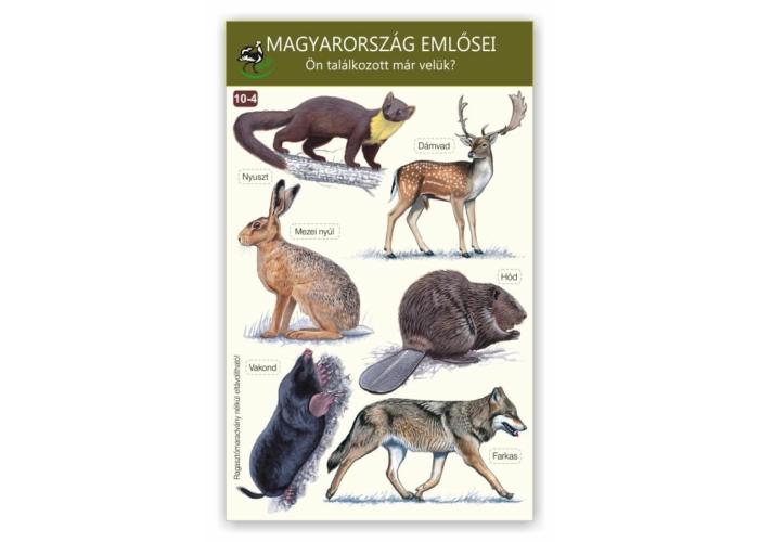 Ablakmatrica - Magyarország emlősei 4.