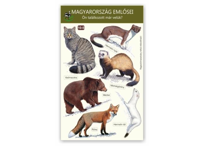 Ablakmatrica - Magyarország emlősei 5.