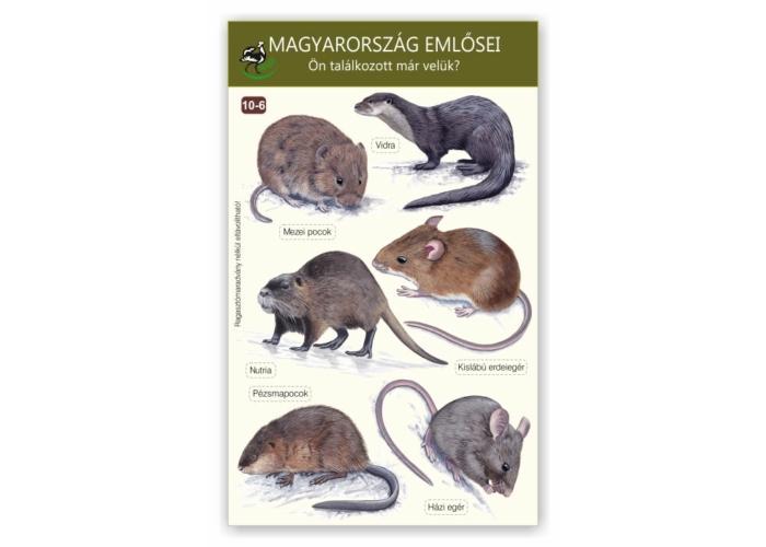 Ablakmatrica - Magyarország emlősei 6.