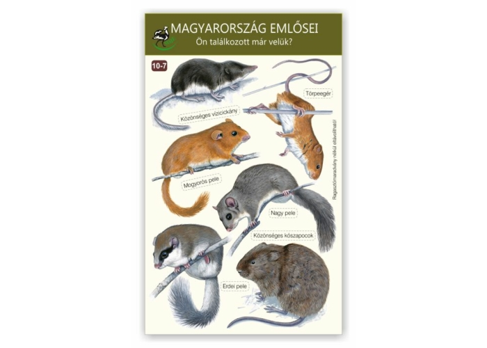 Ablakmatrica - Magyarország emlősei 7.