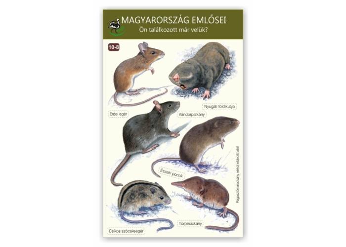 Ablakmatrica - Magyarország emlősei 8.
