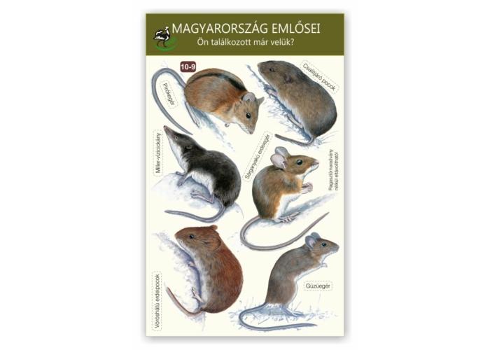 Ablakmatrica - Magyarország emlősei 9.