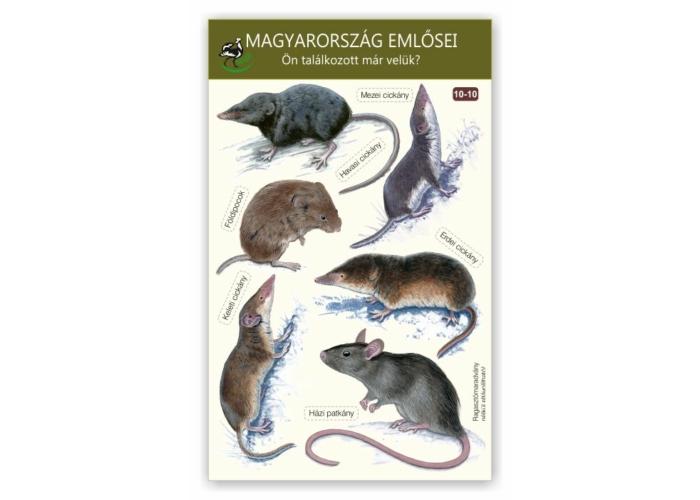 Ablakmatrica - Magyarország emlősei 10.