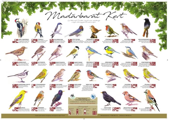 Kertek, parkok madarai plakát